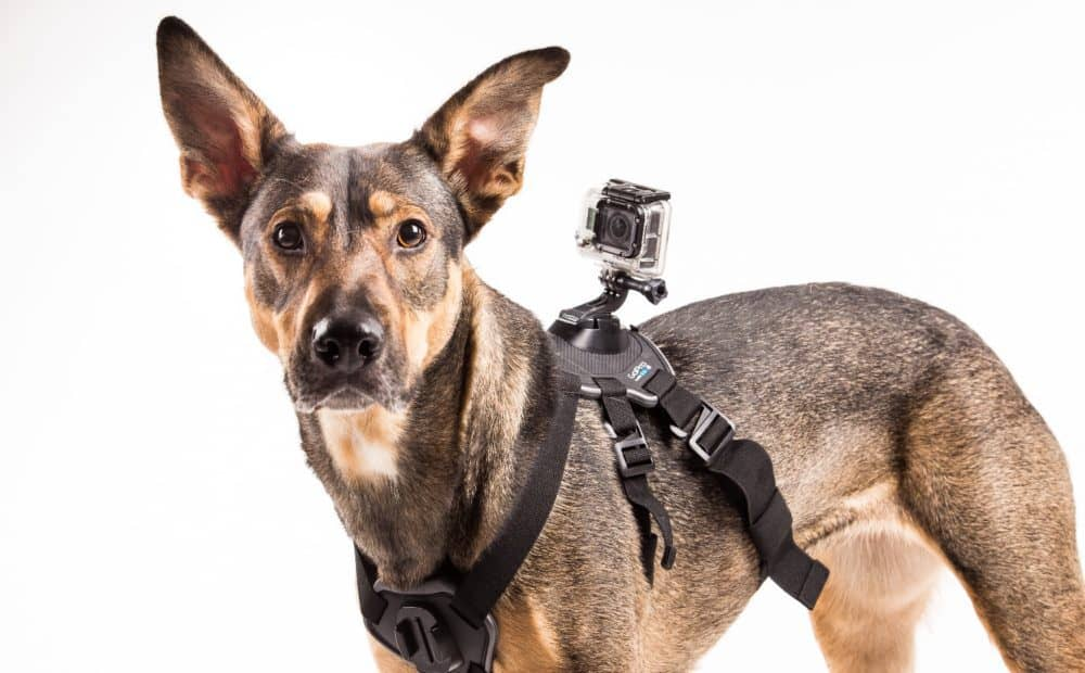 Hafster_GoPro_Fetch_harness_title